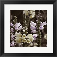 Hint of Spring V Framed Print