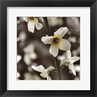 Hint of Spring VI Framed Print