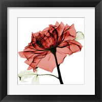Framed Red Rose