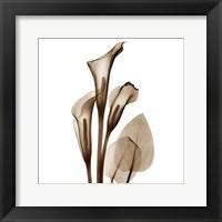Framed Calla Lily Sienna