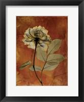 Framed Rose 3