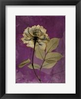 Framed Rose 4