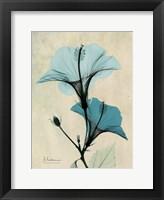 Framed Hibiscus 3