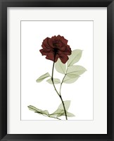 Framed Ox Blood Rose 1