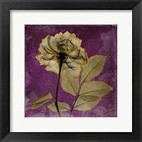 Framed Rose 7
