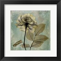Framed Rose 8