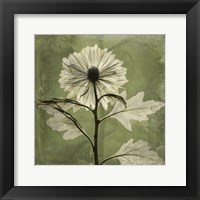 Framed Chrysanthemum Green