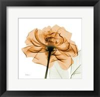 Framed Copper Rose White Leaves