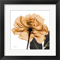 Framed Copper Rose Black Leaves