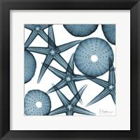 Framed Starfish 2