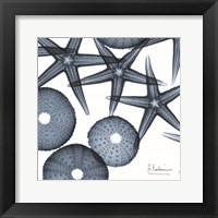 Framed Starfish Trip 3