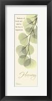 Framed Eucalyptus Harmony