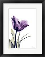Framed Tulip Dream
