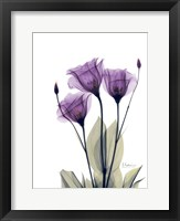 Framed Gentian Hope