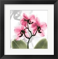 Framed Orchid Pink
