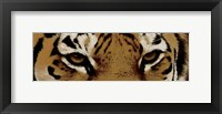 Framed Tiger Eyes