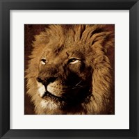 Lion 2 Framed Print