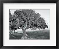 Framed One Tree BW