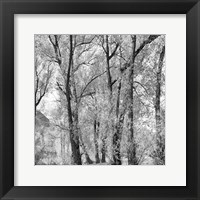 Framed Woods III