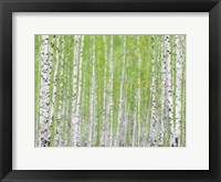Framed Evergreen Timber
