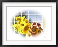 Framed Sunflower 11