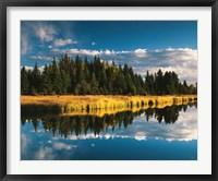 Framed Trees reflecting in Snake River, Grand Teton National Park, Wyoming