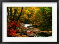 Framed Mountain Stream