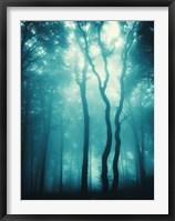 Framed Blue Light Woods
