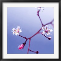 Framed Cherry Flower 3
