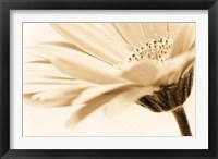 Framed Daisy