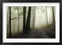 Framed Green Woods 1