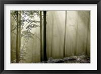Framed Green Woods 2