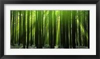 Framed Green Woods 3