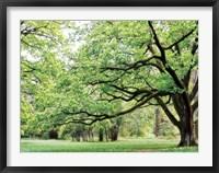 Framed Green Woods 4