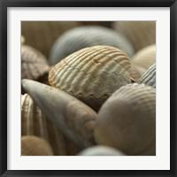 Framed Shells 2