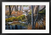 Framed Beaver Pond Buck