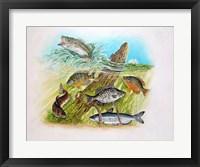 Framed Fishing Derby