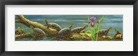 Framed Suncatchers Painted Turtles