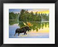 Framed Wilderness Lake Moose