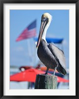 Framed Patriotic Pelican