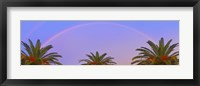 Framed Three Palm Rainbow