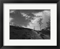 Lonely Path II Framed Print