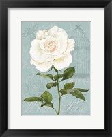 Cream Rose I Framed Print