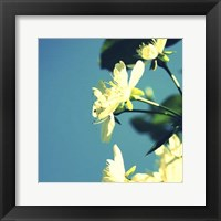 Framed Summer Blossom I