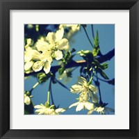 Framed Summer Blossom II