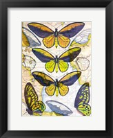 Butterfly Map I Framed Print