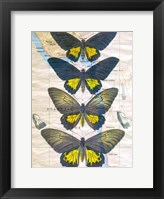Butterfly Map II Framed Print