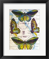 Butterfly Map III Framed Print