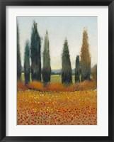 Cypress Trees I Framed Print