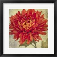 Framed Lush Vintage Florals III
